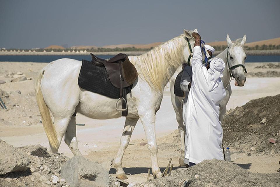 Le Moyen-Orient, une destination de choix pour les randonneurs équestres