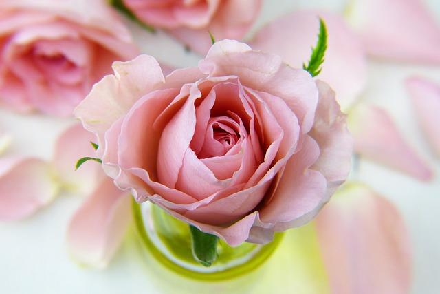 Votre sélection de roses pour la Saint-Valentin