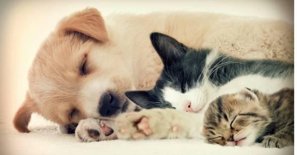 Chien et chat, les avantages d'une assurance pour animaux de compagnie