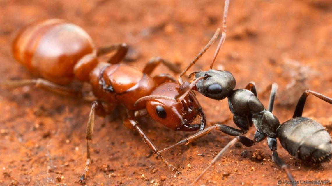 Les trois différents types de fourmis les plus connus