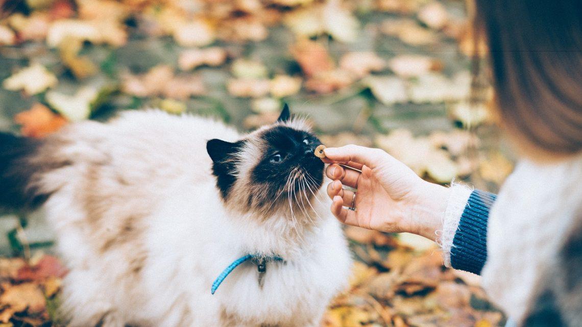Bien-être du chat : quel complément alimentaire choisir ?
