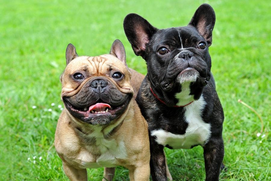 Guide pour rendre votre chien moins craintif