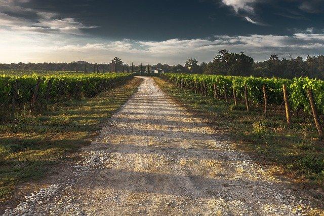 Pourquoi opter pour un vin du Lot-et-Garonne ?
