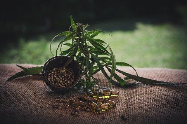 Fleur de CBD : quels sont les effets recensés à ce jour ?